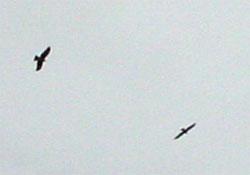 20071017-4.jpg